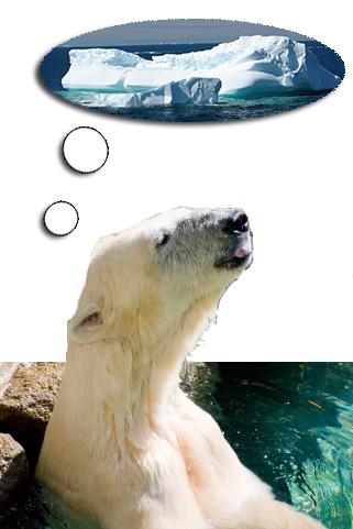 地球温暖化シロクマ